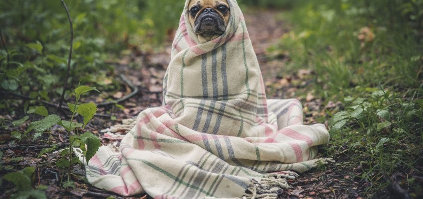 Hund_med_tæppe