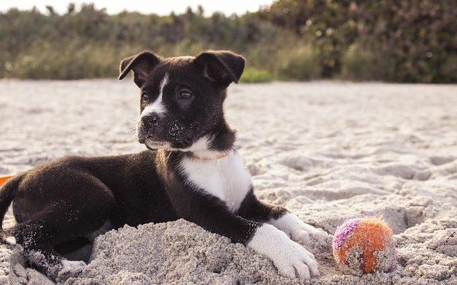 hund strand